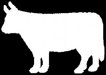 boeuf-blanc.png