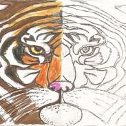 tigr.jpg
