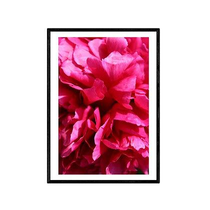 Pink Flower Photo Print