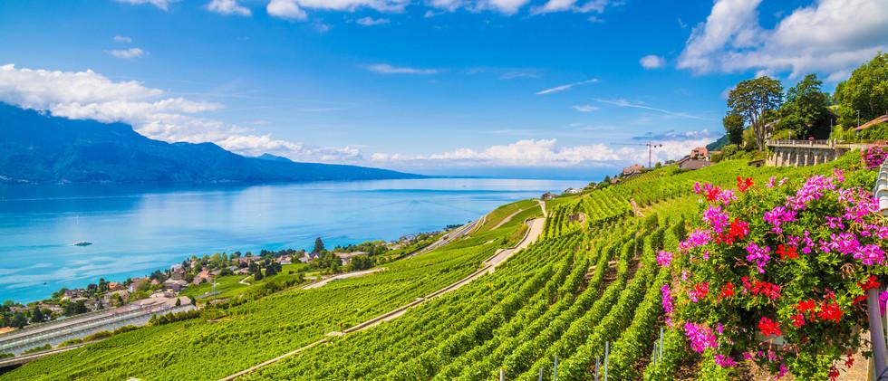 Canva - Lavaux wine region at Lake Genev