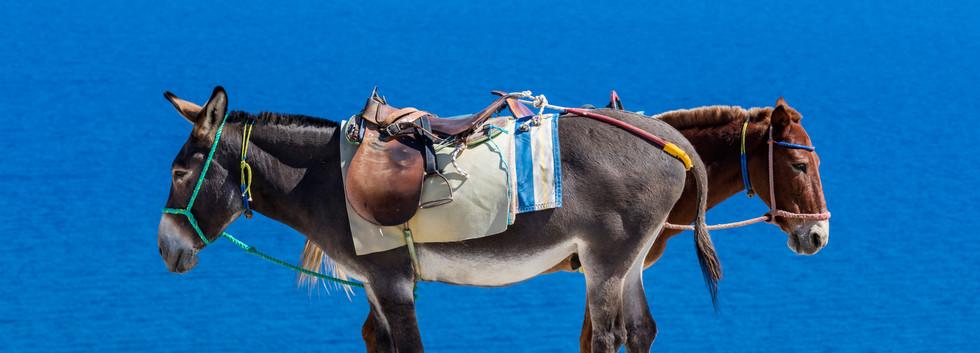 Canva - Santorini, Greece (1).jpg