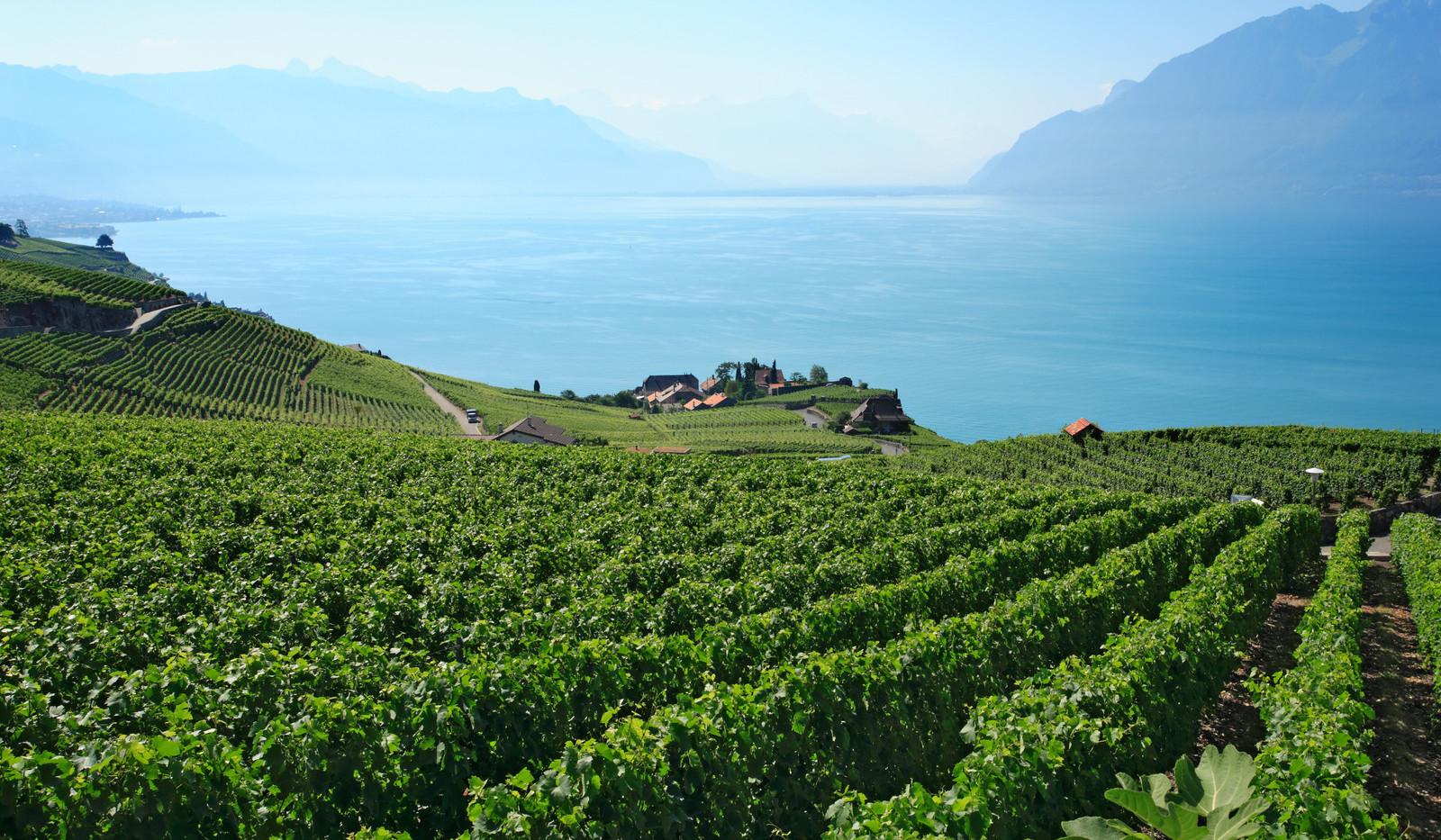 Canva - Vineyards in Switzerland.jpg