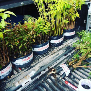 Start no Projeto de Reflorestamento da Mostra Container