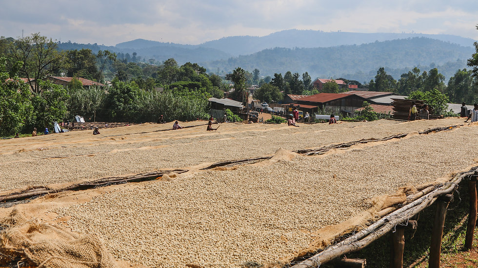 Ethiopia Kayon Mountain Coffee