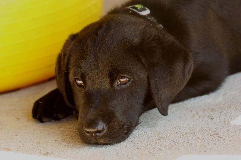puppychar2