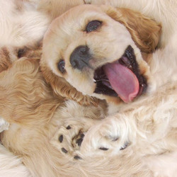 Happy Pup 2015-12-30-23:17:32