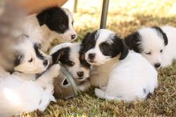puppy piles