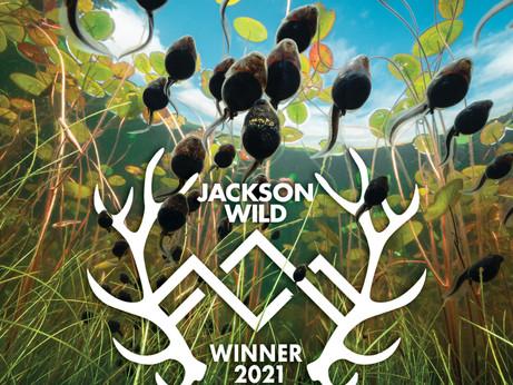 Jackson Wild Winner!