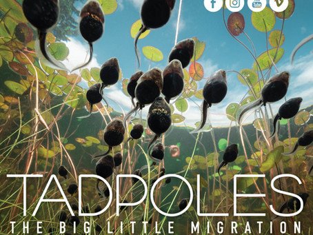 Tadpoles wins Best Cinematography!