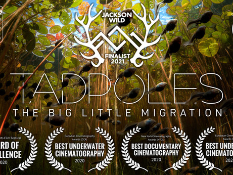 """Tadpole Movie Makes Finals of Jackson Wild - """"Oscars for natural history"""""""