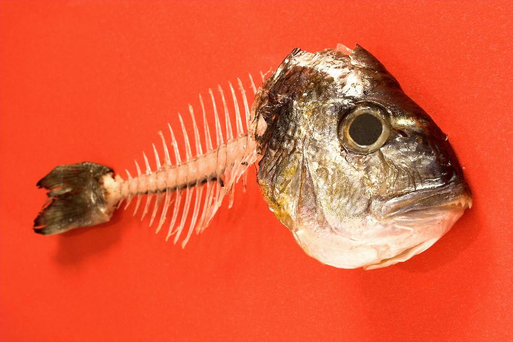 Fish Bone.jpg