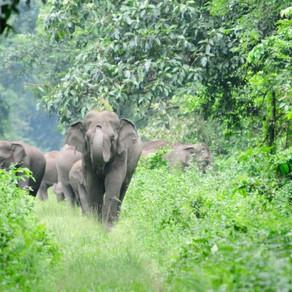 Trunks Up for Kerala Corridors!