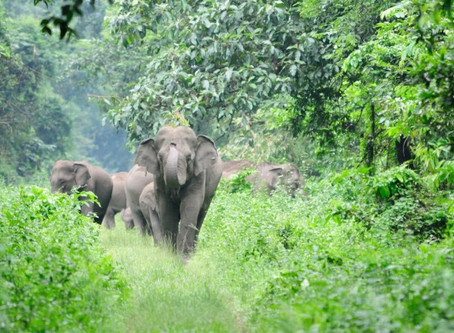 Trunks Up for Kerala Corridors!