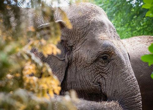 elephant-4455857_960_720.jpg
