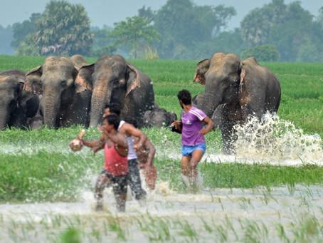 Take Action on World Elephant Day