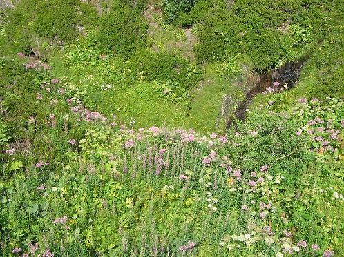 Le Jardin des Alpes: REASSURANCE