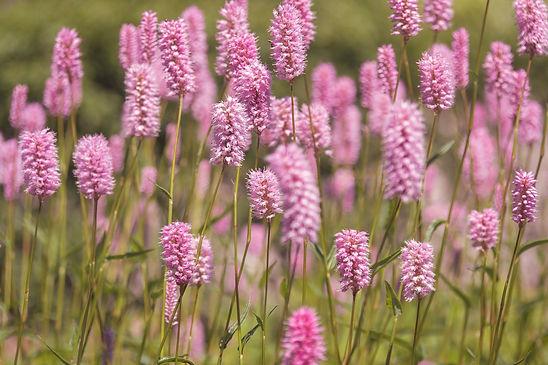 meadow-5229169_1920.jpg
