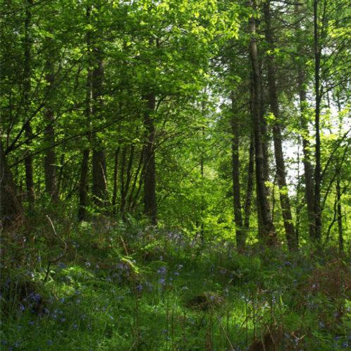 Spring Greens: HEALING ENVIRONMENT