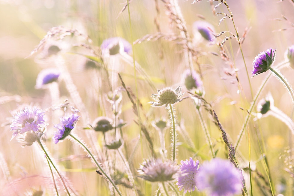 wildflowers-1406846_1920-2.jpg