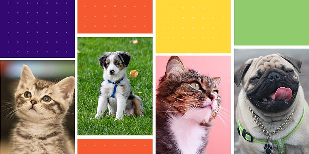 PET products (1)_edited.jpg