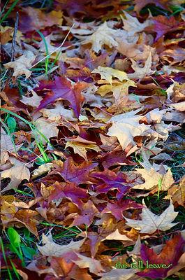 journal 200 cover fall leaves.jpg