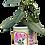 Thumbnail: PP-R6010 Floral Large Pot planter
