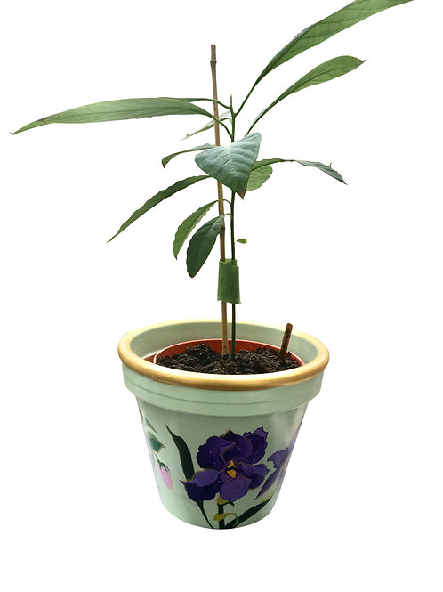 PP-R6014 Medium size Pot Planter