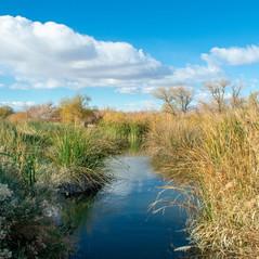 Wetland Resources