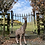 Thumbnail: Giraffe Statue
