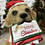 Thumbnail: Christmas Dog with Post!