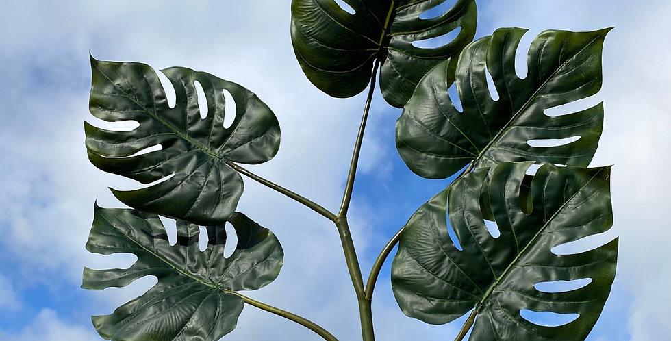 Monstera 5x Leaf Foliage