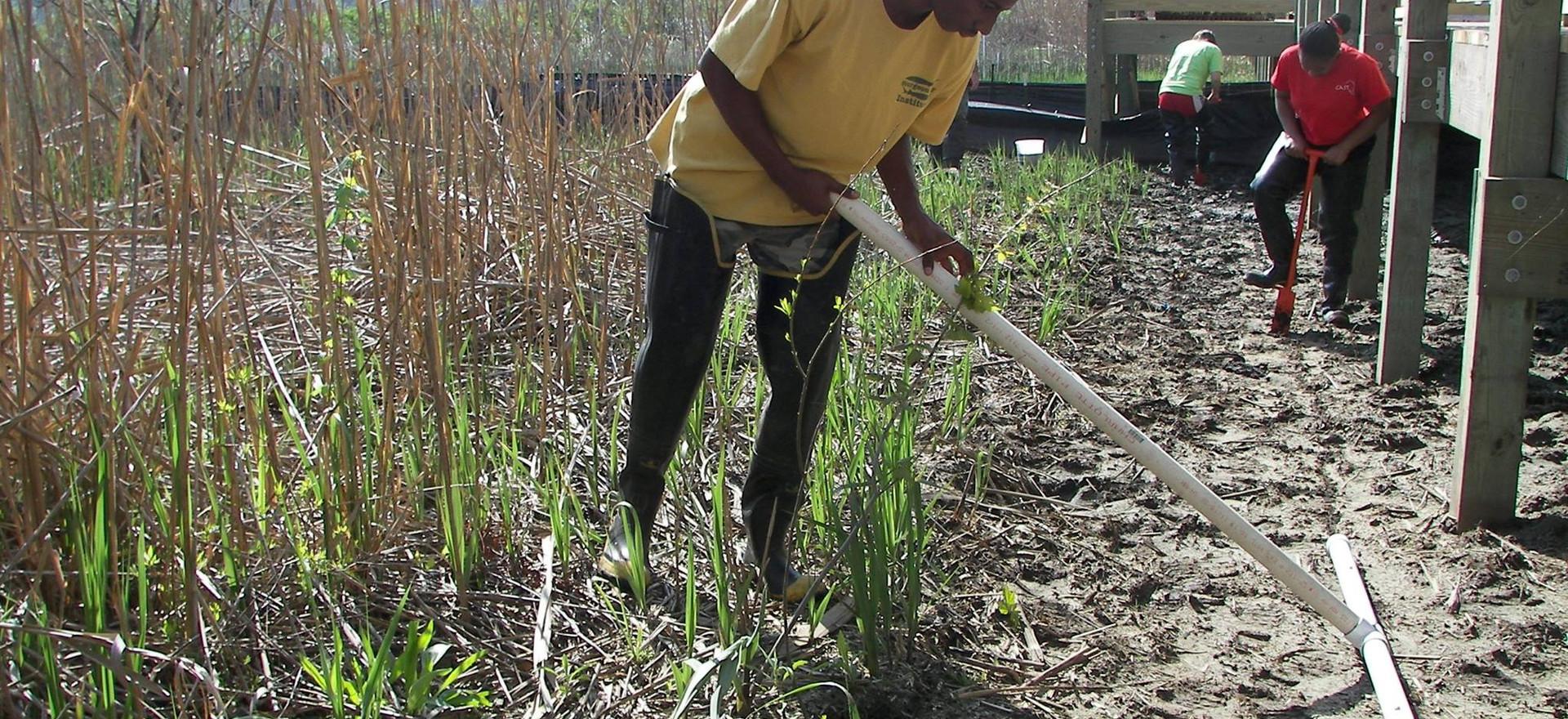 Wetland Resoration