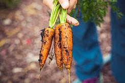 FarmHouses_and_Organic_Holidays.jpg