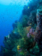 Diving with Nature Island Dive Dominica3