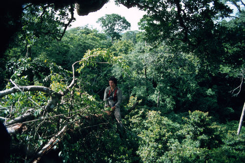 The magnificent world of the canopy