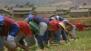 Bai minority women in the rice fields of Heqing, which was closed to foreigners at the time