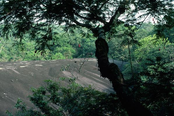 Korup National Park, Leopard's Rock