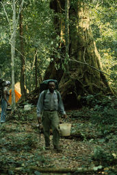 Ferdinand Namata knew the scientific names of many of Korup's tree species