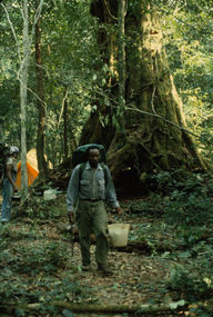Ferdinand Namata knew the scientific names of many of Korup's tree species