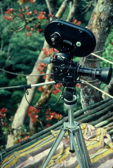 Filming camera amongst the young red leaves of Lophira elata, The Giant Ironwood Tree.