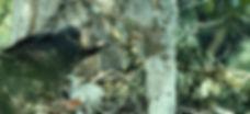 Crowned Hawk Eagal, Fragile Earth