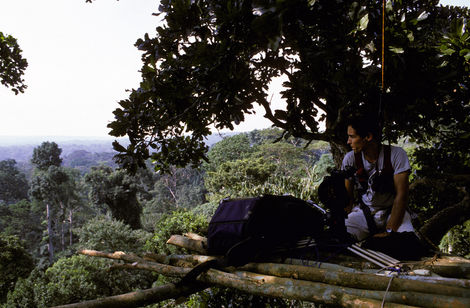 The views out over the treetops were often breathtaking