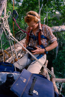 Mike Harrison recording sound in the canopy