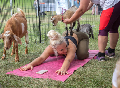 Goat Yoga: An Experience Unlike Any Other