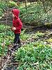 Bärlauch finden