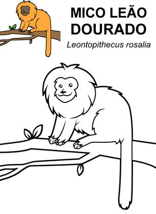 mico-leao-dourado.png