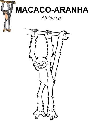 macaco-aranha.png
