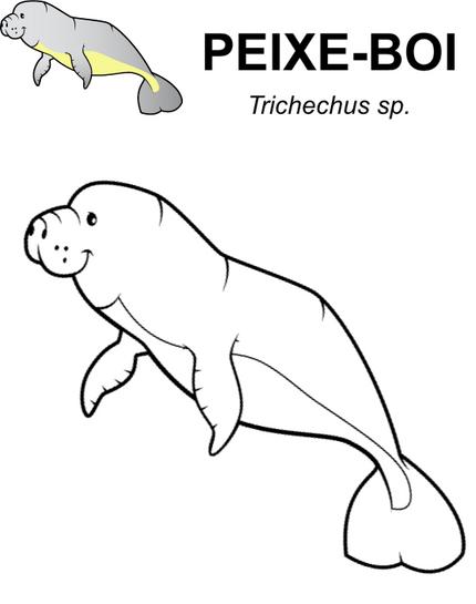 peixe-boi.png