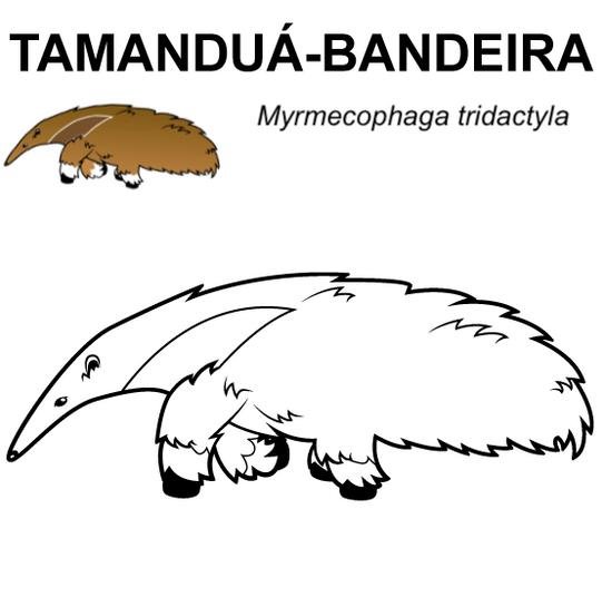 tamandua-bandeira.png
