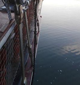 Red para mascotas barco atyla
